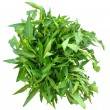 Stok fotoğraf: Bunch of fresh spinach on top of white