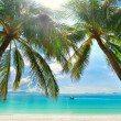 Island Paradise - Palm trees hanging over a sandy white beach — Stock Photo