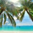 島の楽園 - 白い砂浜の上にぶら下がってのヤシの木 — ストック写真