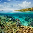 Coral reef on the island of Menjangan. Indonesia — Stock Photo