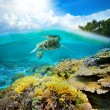 Underwater life of a coral reef — Stock Photo