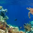 Underwater panorama in a coral reef with colorful sealife — Stock Photo #36239769