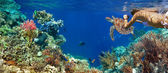 Underwater panorama in a coral reef with colorful sealife — Stock Photo