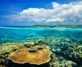 Beautiful Coral reef on background Gili Meno Island — Stock Photo