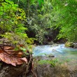 Tropical rainforest and river. — Stock Photo