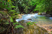 Tropical rain forest with a clean river shot long exposure — Stock Photo
