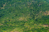 View from the top on the rain forest — Stock Photo