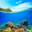 Coral reef, colorful fish and sunny sky shining through clean oc — Stock Photo #45611997