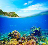Coral reef, colorful fish and sunny sky shining through clean oc — Stock Photo