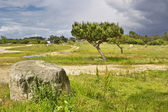 Pines op bao park — Stockfoto