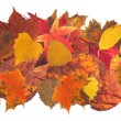 Stock Photo: Autumn leaves2