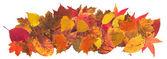 Autumn leaves2 — Stock Photo