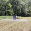 Stock Photo: Spraying corn2