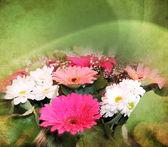 Çiçek arka plan — Stok fotoğraf