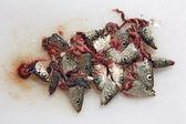 Heads sardines — Stock Photo