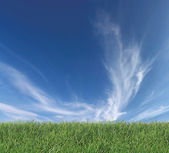 Sky and grass — Stockfoto