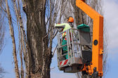 Trimming trees 2 — Stock Photo