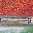 Bench and red leaves — Stock Photo