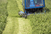 Cutting grass — Stock Photo