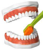 Teeth and toothbrush — Stock Photo