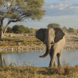 Namibia, Etosha National Park, Elefant — Stock Photo