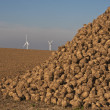Energy, sugar beets and wind turbines — Stock Photo