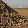 Energy, sugar beets and wind turbines - Stock Photo