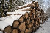 Madeira serrada no inverno — Foto Stock