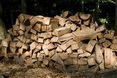 Wood, cut — Stock Photo