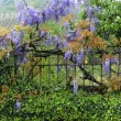 Garden fence and flowers - Stock Photo