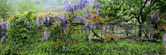 Garden fence and flowers — Stock fotografie