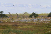 Animals, Etosha National Park — Stock Photo