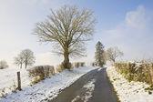 Camino de invierno — Foto de Stock