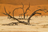 Namib desert, Sossusvlei, dead trees — Stock Photo