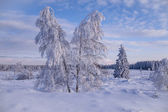 Winter wonder land with trees — Stock Photo