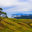 Rural landscape, New Zealand - Stock Photo