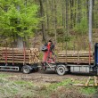 Lumber transport — Stock Photo