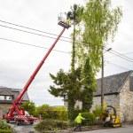 Tree trimming — Stock Photo