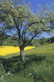 Spring awakening, springtime approaching — Stock Photo