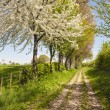 Footpath at springtime — Stock Photo