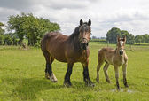 Horses, mare and foal — Stock Photo