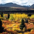 Indian summer, Yukon, Canada — Stock Photo