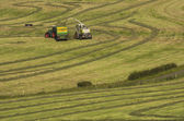 Haymaking, forage harvester — Stock Photo