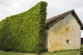 De 345 Hedge as windbreak — Stock Photo