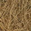 Texture background of hay. Freshly harvested . - Stock Photo