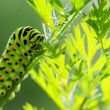 Green caterpillar on natural background - 图库照片