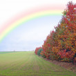 Stock Photo: Green filed of winter grain crops - rainbow - for backgrounds
