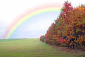 Green filed of winter grain crops - rainbow - for backgrounds — Stock Photo