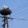 Two white storks in the nest on the elektrical pole blue sky — Stock Photo #13340265