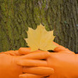 To lock hands, Orange glove, green tree, yellow leaf, autumn - Stock Photo